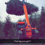 tractor real christmas trees