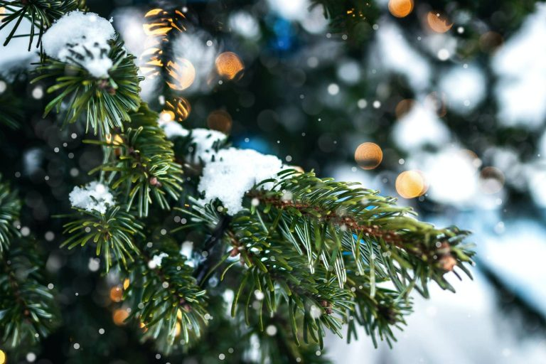 luton christmas tree